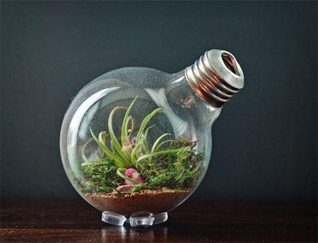Home-Dzine - Make a light bulb terrarium & Home-Dzine - Make a light bulb terrarium | 0 DIY | Pinterest ... azcodes.com