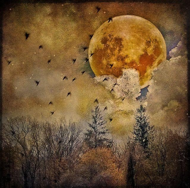 Magical Clair De Lune Pleine Lune Et Art