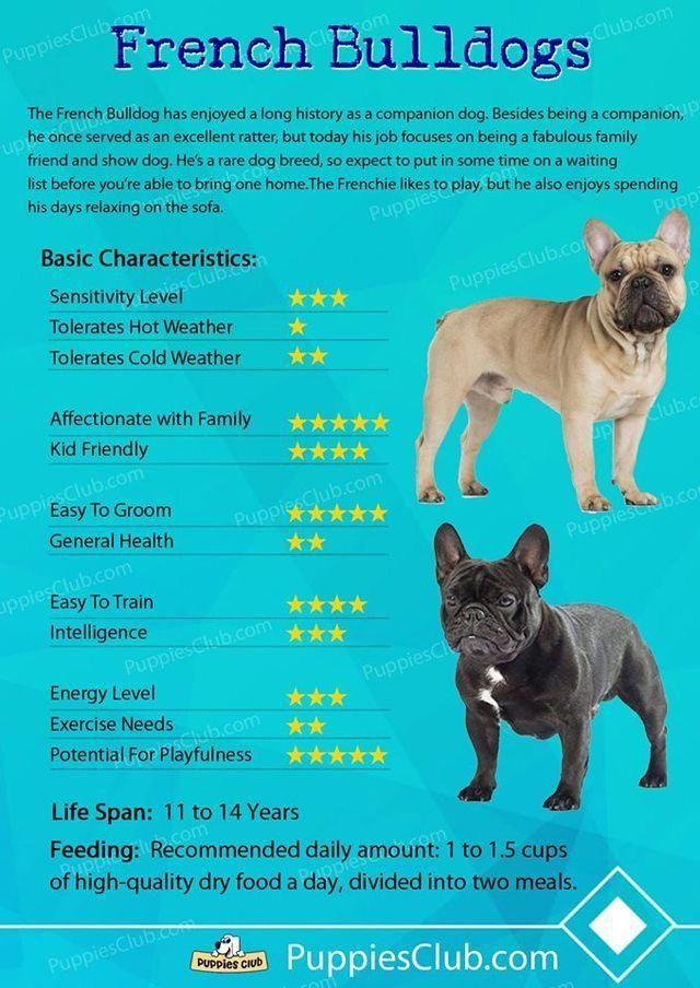Popular For Their Trainability And Delighted Dispositions The Golden And Labrador Retrievers Are Th With Images French Bulldog Breed Bulldog Breeds French Bulldog Puppies