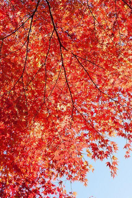 Alberi da giardino consigli e suggerimenti per aiutarvi nella scelta autumnal pinterest - Alberi da giardino consigli ...