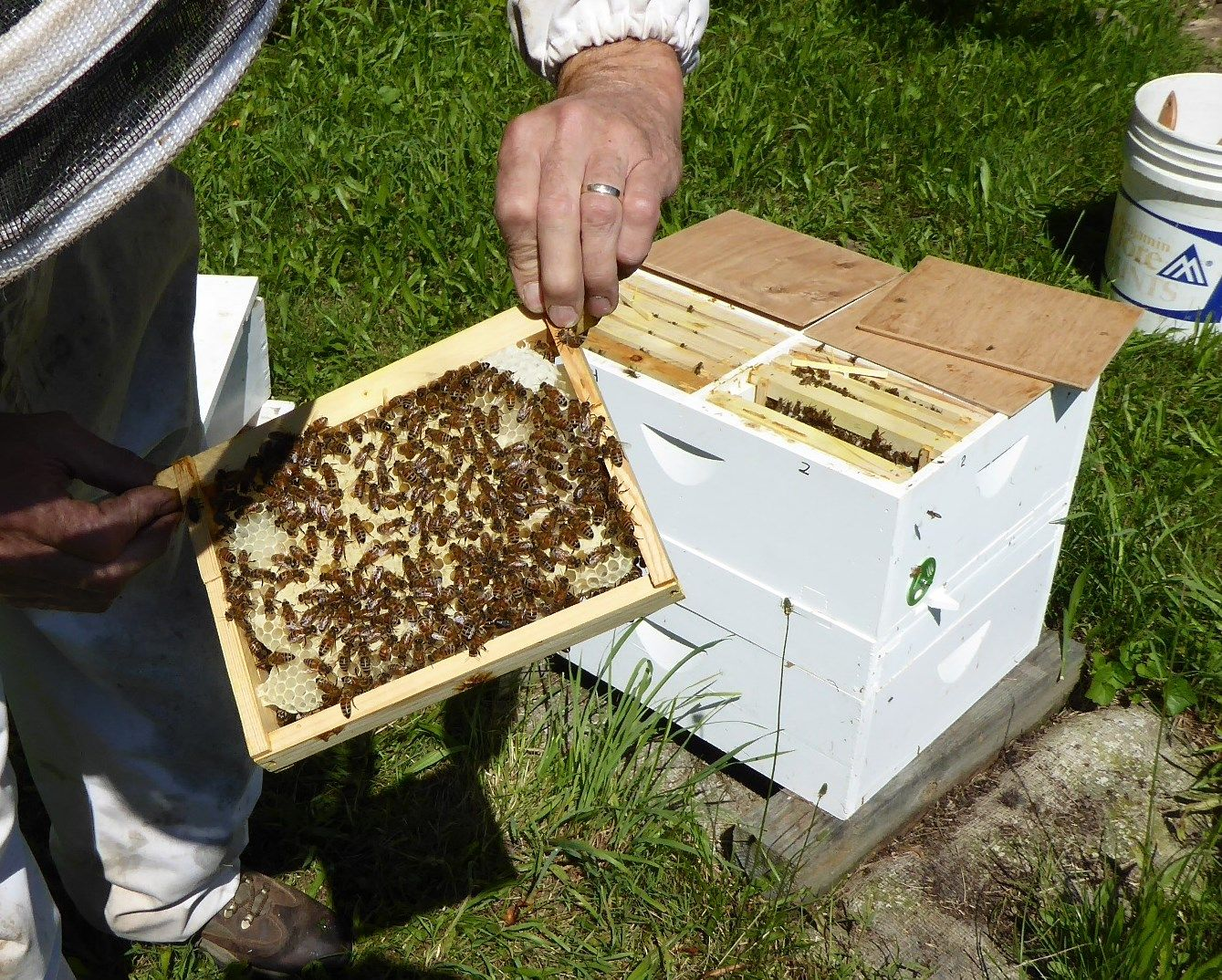 Build a HiveThe Beekeepers « Bee keeping, Bee