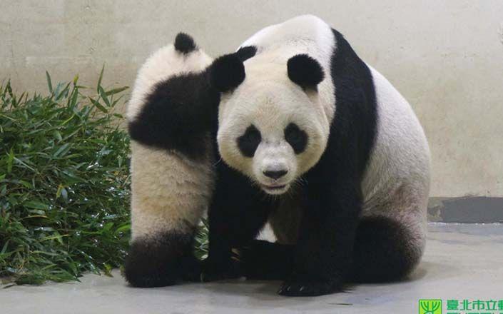 Yuan Zai and her mom Yuan Yuan
