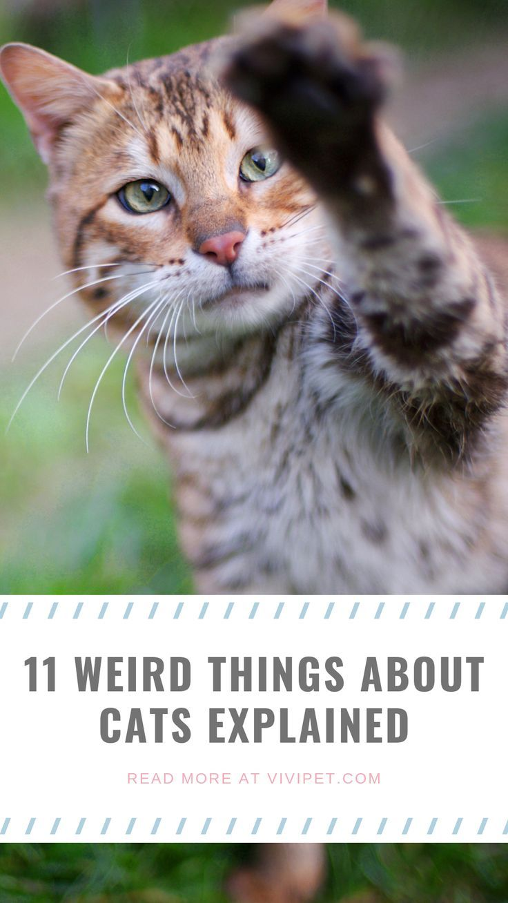 11 Weird Things About Cats Explained Cats, Cat diseases