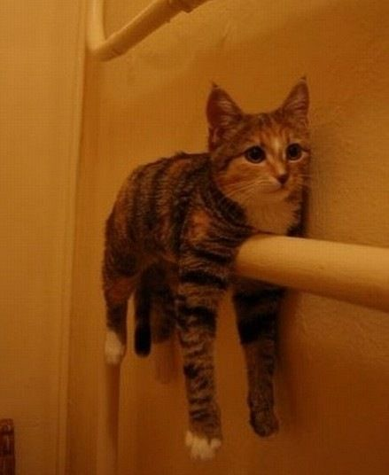 Cat Stuck On Pipe How Did It Get There In The First Place
