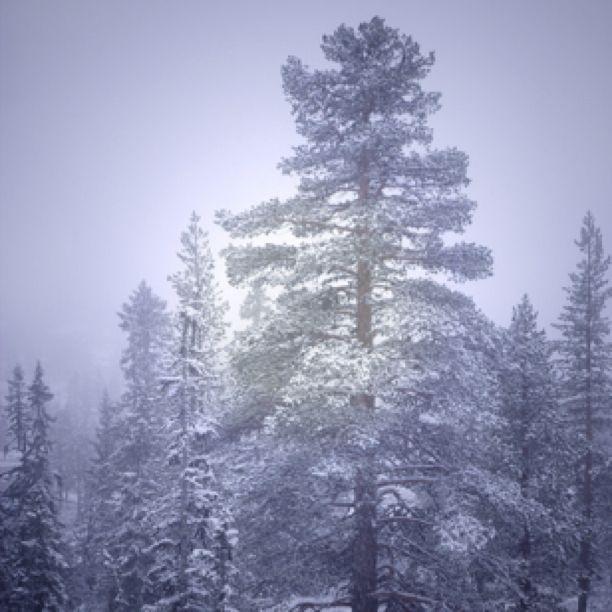 Norwegian Winter Wonderland