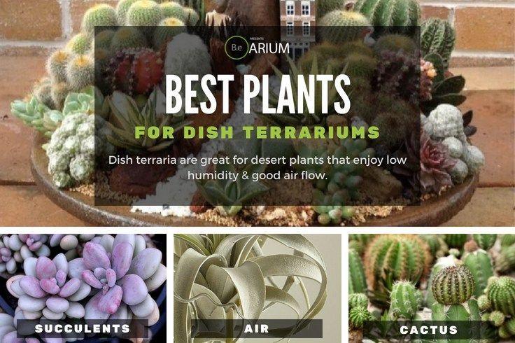 best plants for a dish terrarium