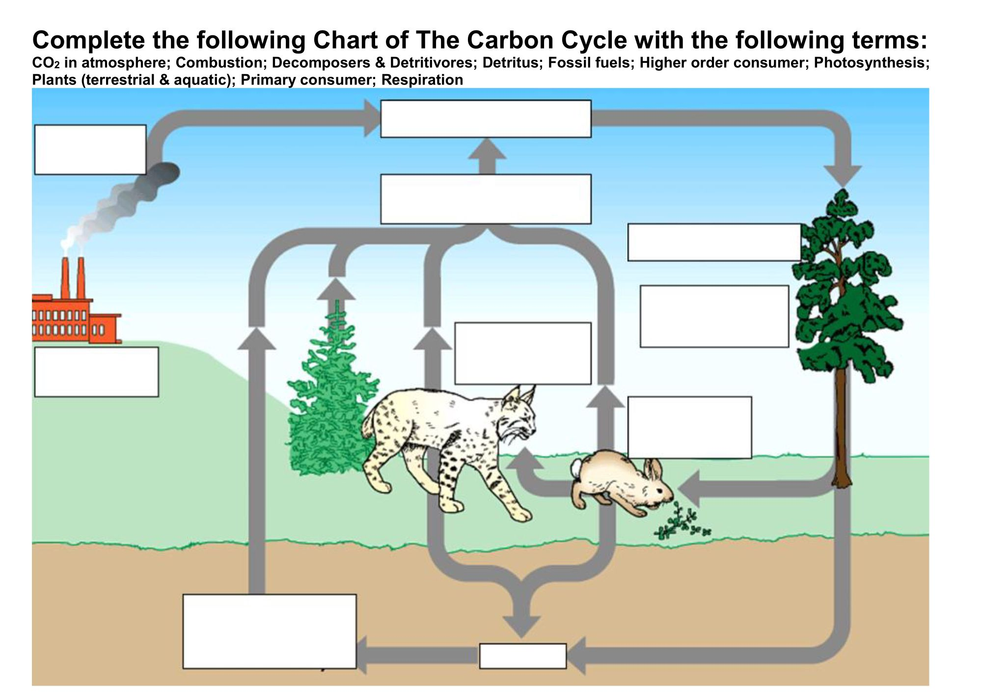 Pin On Carbon Cycle