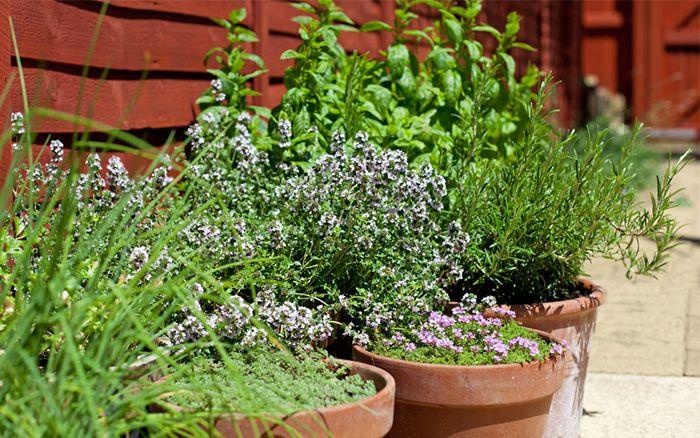 5 best easy to grow outdoor plants for beginner gardeners growing 5 best easy to grow outdoor plants for beginner gardeners potted gardenbalcony gardenherb gardencontainer workwithnaturefo