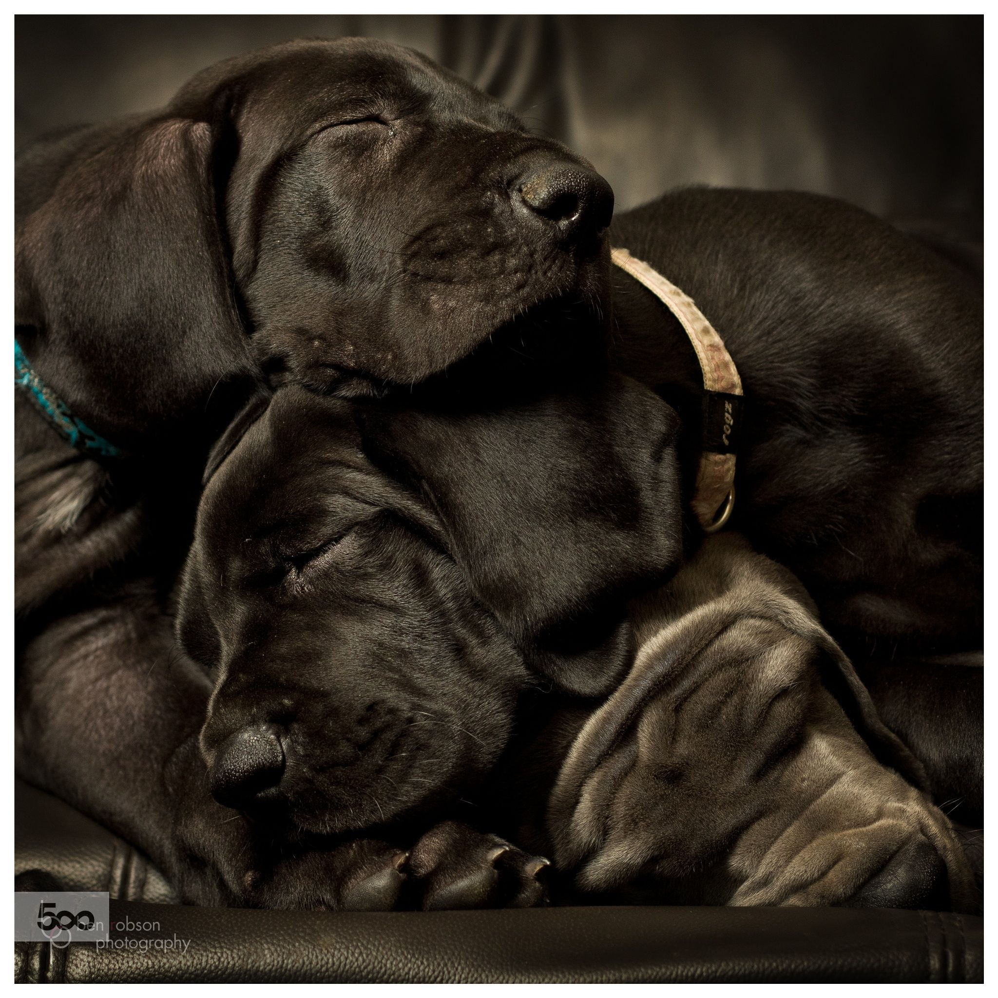 Sleeping Beauties Square By Ben Robson On 500px Dog Training