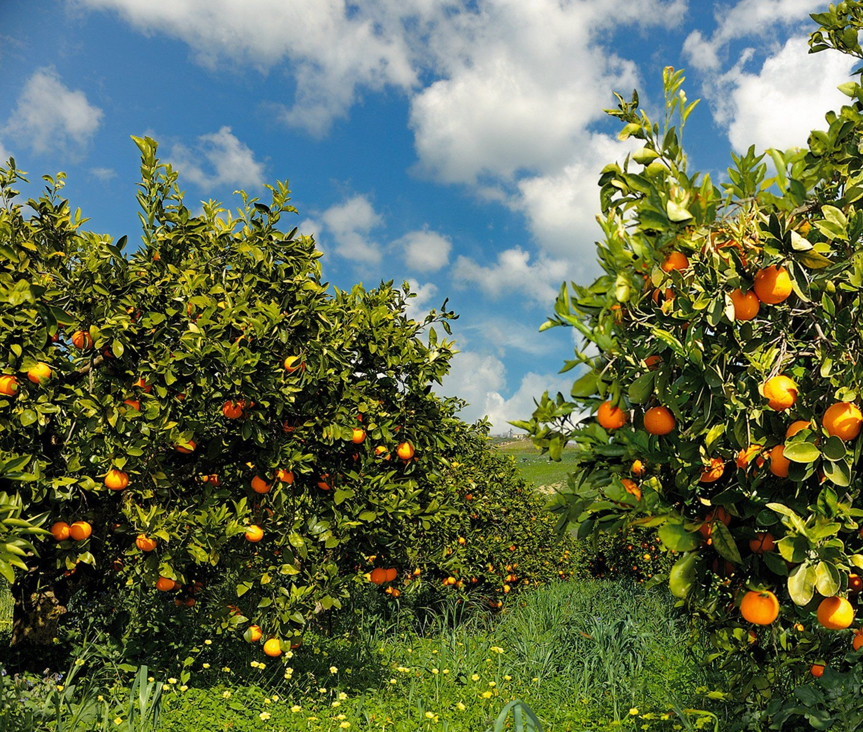 In Sicilia sono state confiscate alla criminalità organizzata ben 1148 aziende agricole | Report Campania