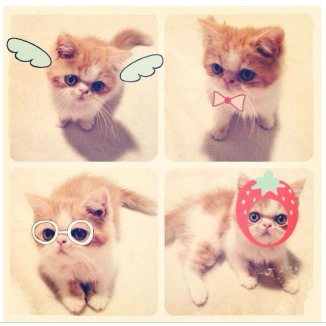 kittay kittay kittay