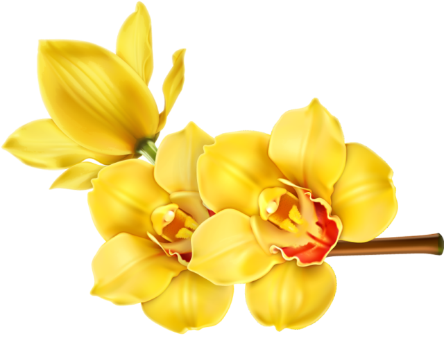Clip Art of beautiful tropical flowers. Tropical flowers