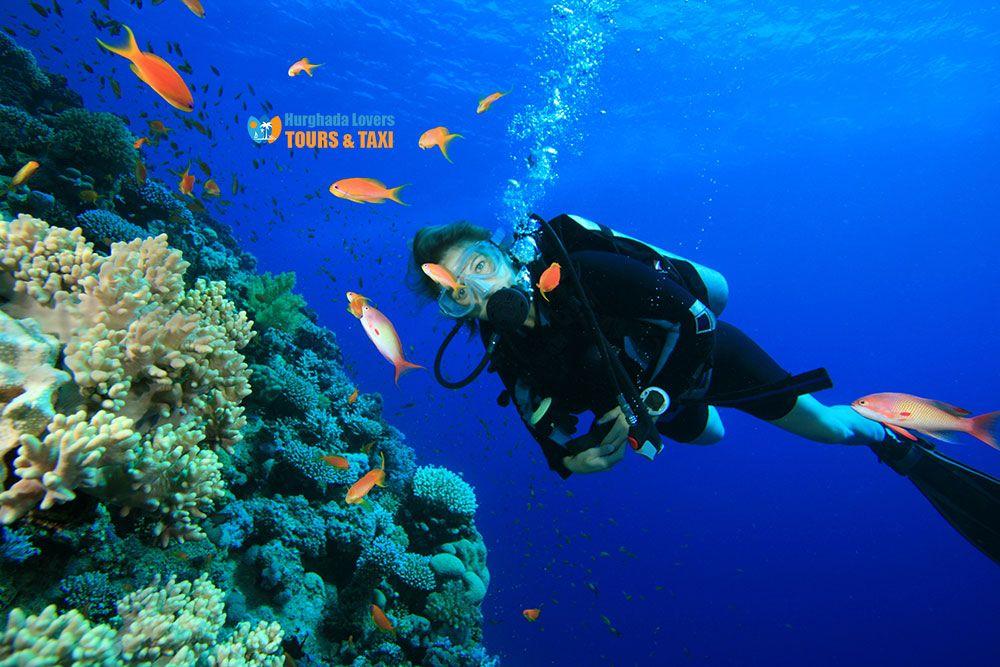 Things To Do In Hurghada Egypt Top 10 Hurghada Excursions Hurghada Hurghada Egypt Egypt Travel