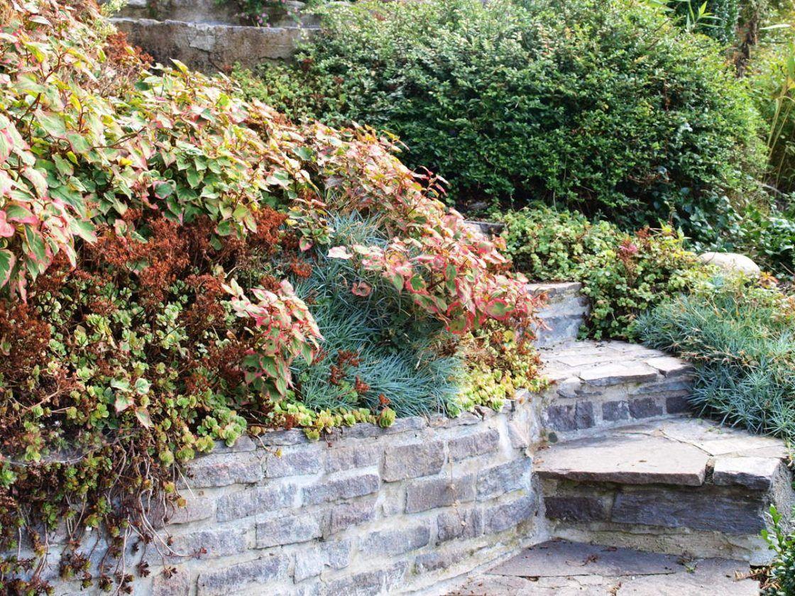 Der Hanggarten Boschungen Bepflanzen Befestigen Boschung Bepflanzen Garten Bepflanzen Garten Am Hang