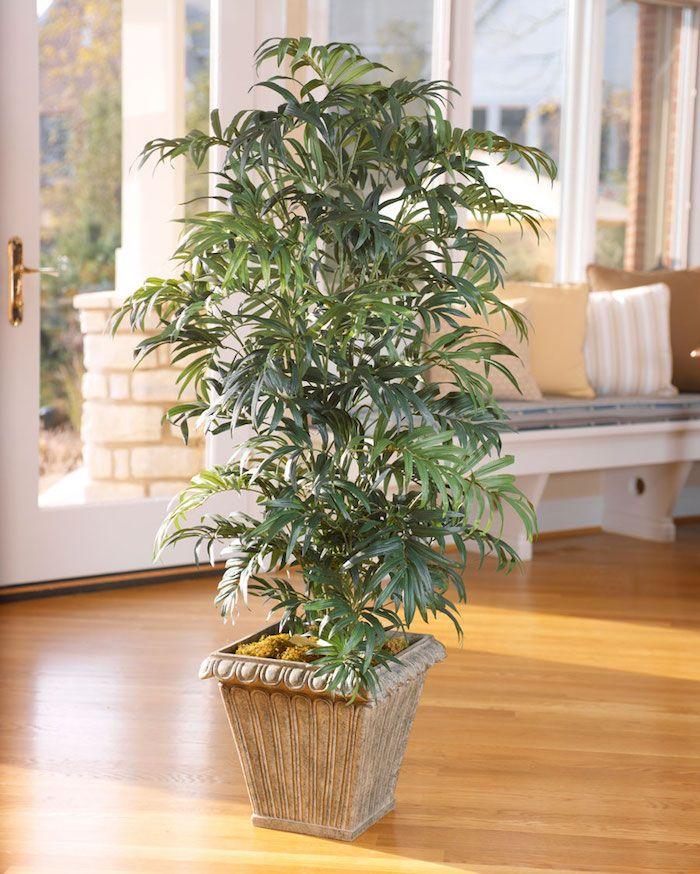 Pflanzen Die Kein Licht Brauchen eine palme in keramischen blumentopf in der mitte des zimmers