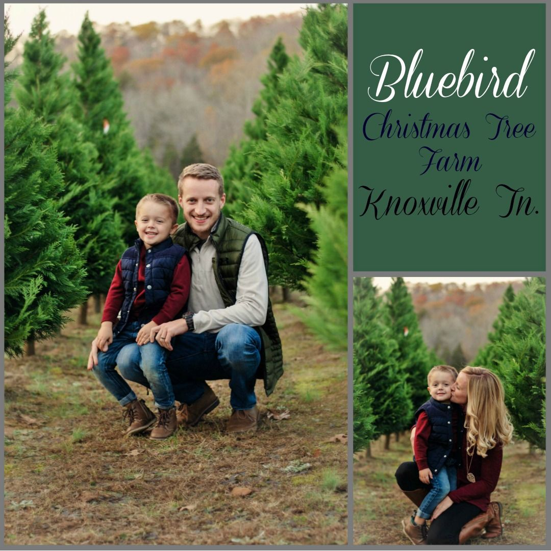 Bluebird Christmas Tree Farm Knoxville Tn Photography