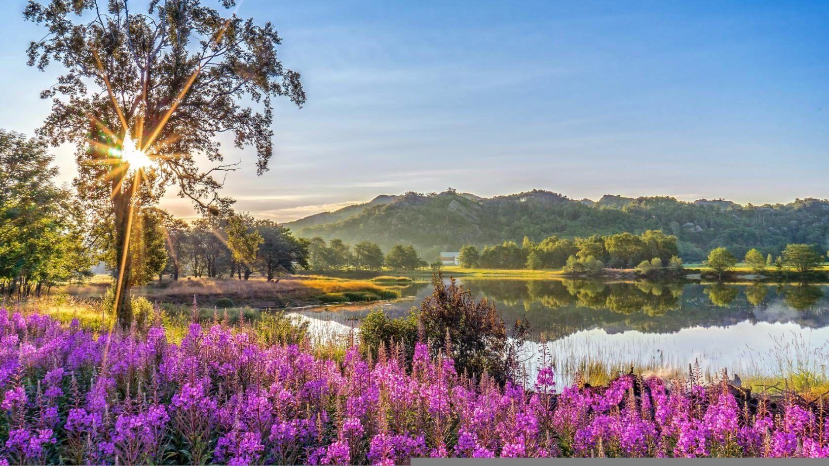 Самые красивые картинки природы летом