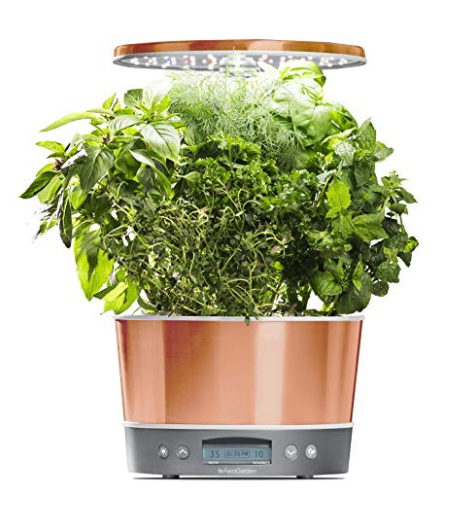 New herbs and vegetables prosper throughout the entire