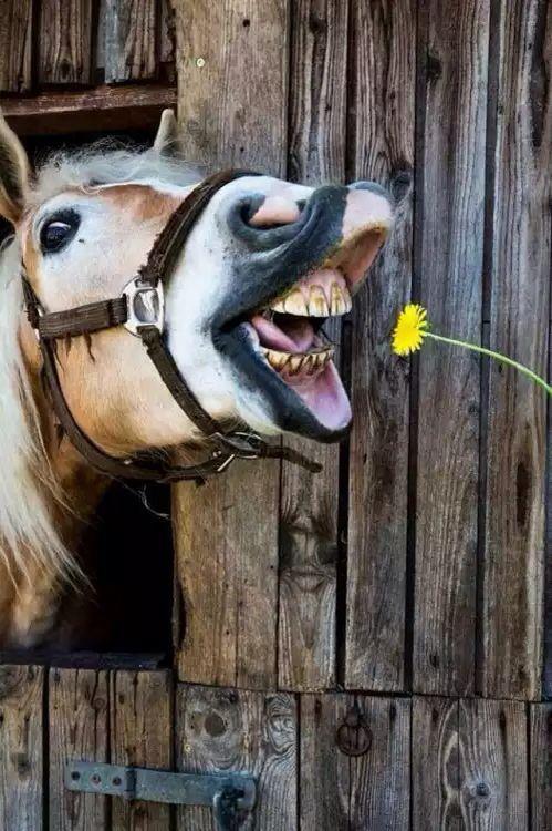 Картинки смешные коня