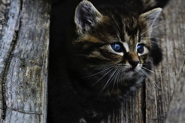 Free Image On Pixabay Cat Kitten Cute Little Wood Animals Pets Cats Kittens Cutest