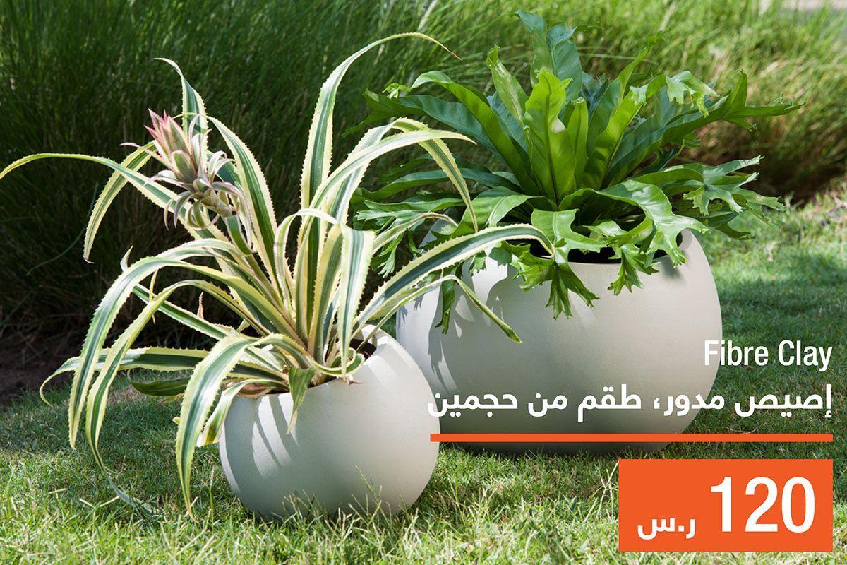 Abyat Ksa Abyatksa Twitter Plants Twitter