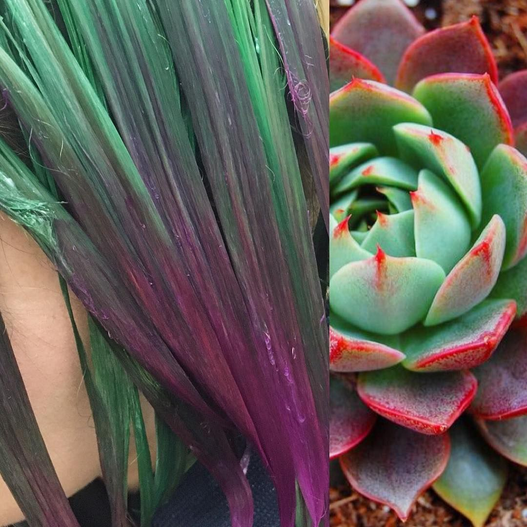 What Is Succulent Hair? Here's Why You Should Try A New Cactus-Colored 'Do — PHOTOS
