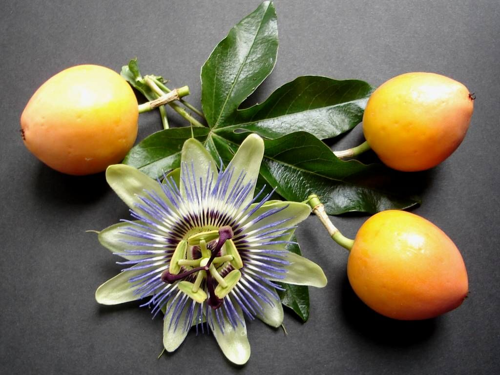 Passion Flower and Fruit by *Thelma1 on deviantART  Possible composition for crayon on fabric.