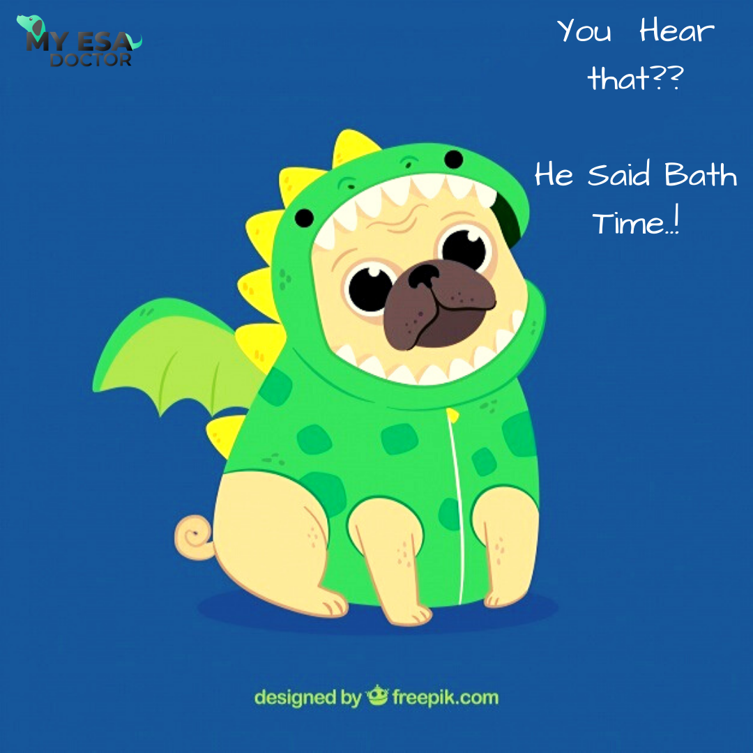 He Said Bath Time. Emotional support animal