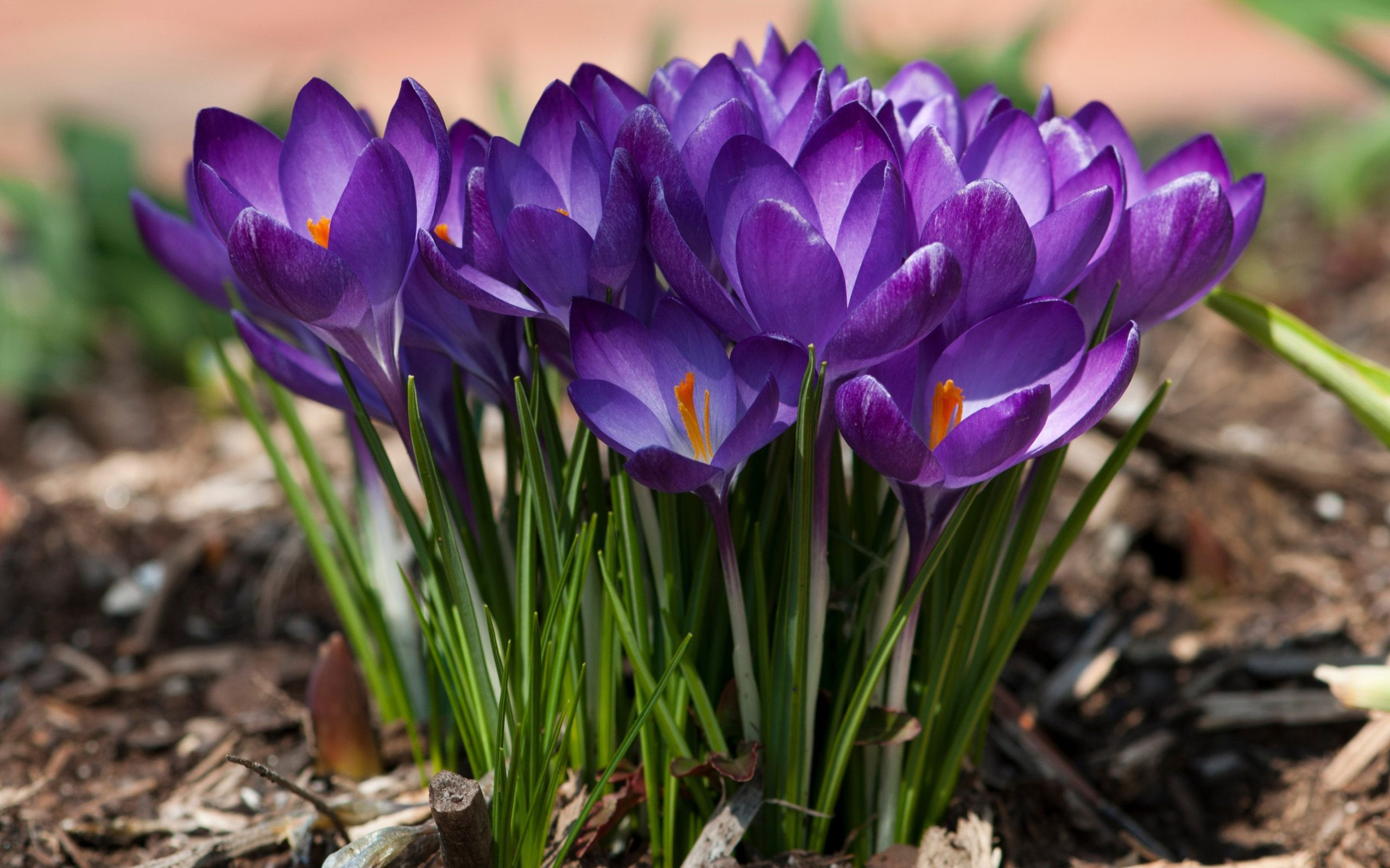Nice best flowers in world nature uhd pinterest wallpaper free nice best flowers in world izmirmasajfo Gallery
