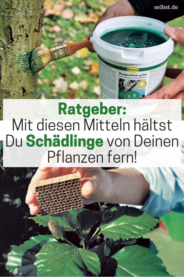 Schadlinge Pflanzen Erkennen Garten Und Schadlinge