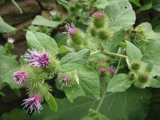 14 Wild Medicinal Plants.. 14 great plants that you can find in the wild places. Some can even be picked up at garden centers and added to your own personal medicine garden.