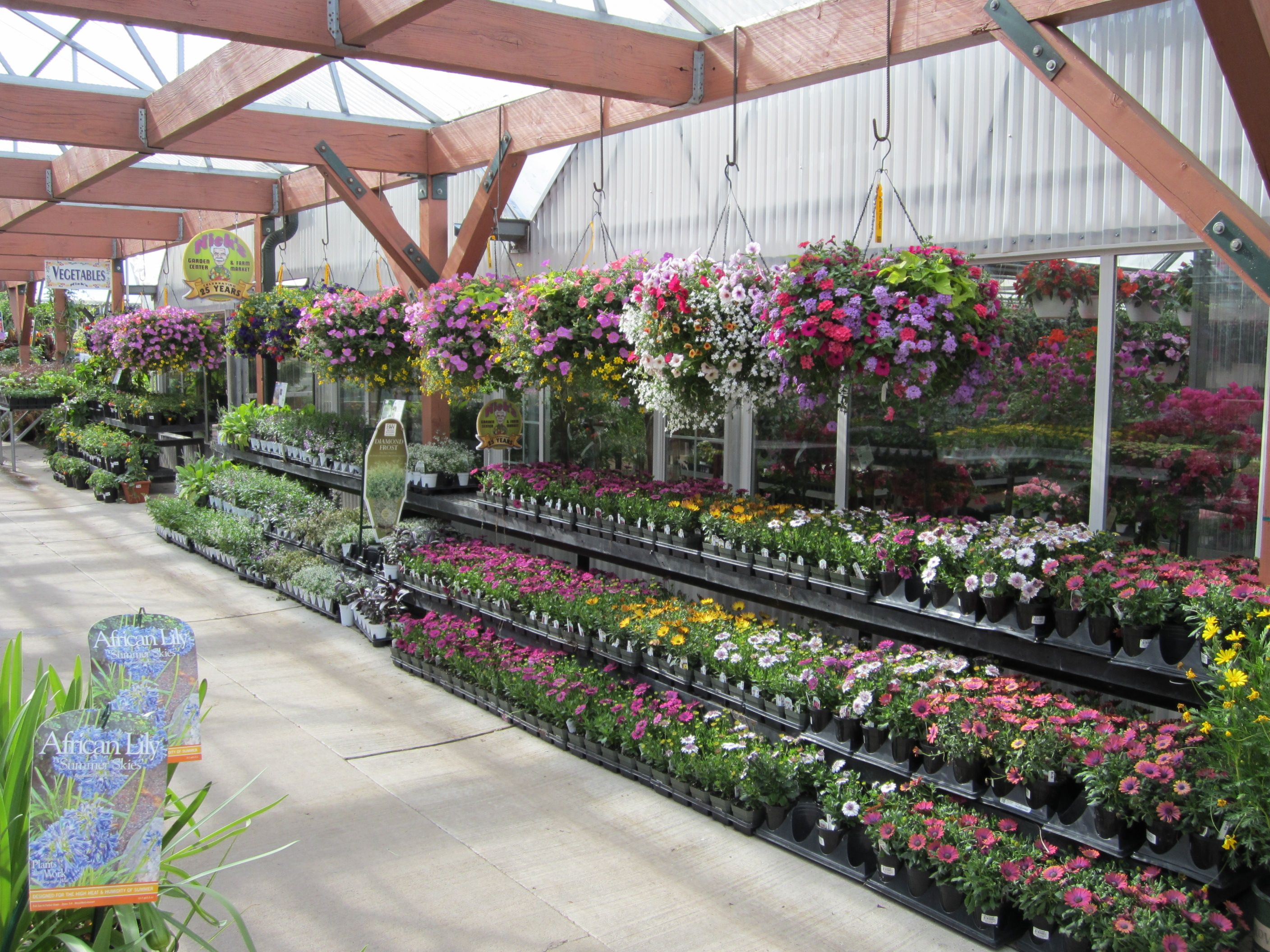 Hanging Baskets Or Annuals For Bedding Plants We Have The Flowers