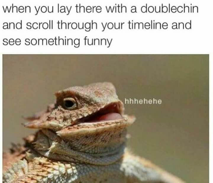 Hhhehehe Lizard With A Double Chin Funny Pictures Can T Stop Laughing Laugh Lol