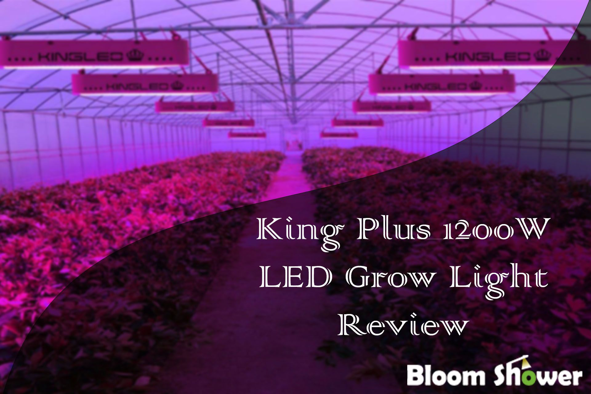 King Plus 1200w Led Review Led Grow Lights Grow Lights Led Grow