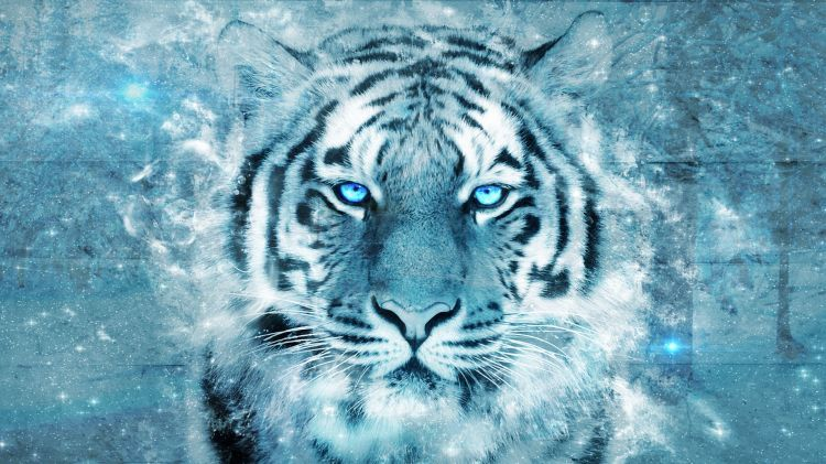 Fonds D Ecran Animaux Fonds D Ecran Felins Tigres Tigre Par Staiix Hebus Com Petit Felin Animaux Tigre Blanc