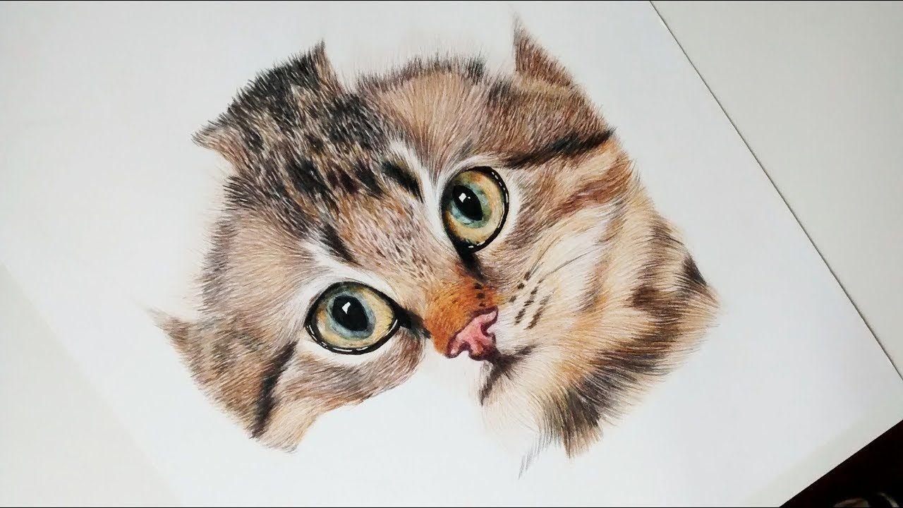 Como Dibujar Y Pintar Un Gato Realista How To Draw And Paint A Realist Como Dibujar Un Gato Cómo Dibujar Cosas Dibujos