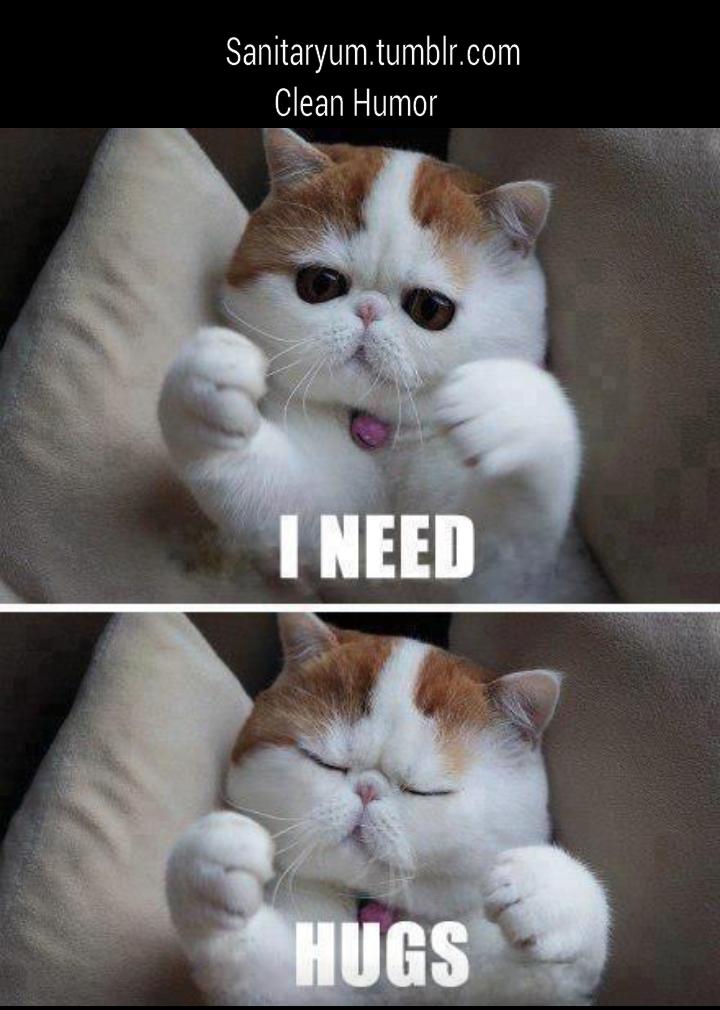 Sanitaryum Clean Funny Pics & Clean Humor Photo Cats