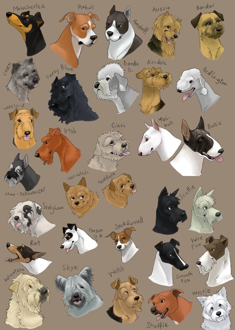dog icons TERRIER GROUP by shelzie on deviantART Dog