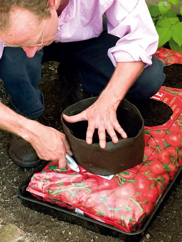 Bag Up Some Tomatoes Grow Very Successfully In Bags A Greenhouse Or Oudoors Crops Can Be Improved By Inserting Bottomless Pots Full Of