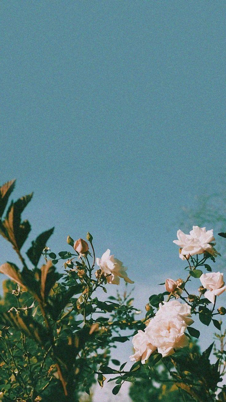 Flowerstyles Gf Hashtag Instagram Posts Videos Stories On