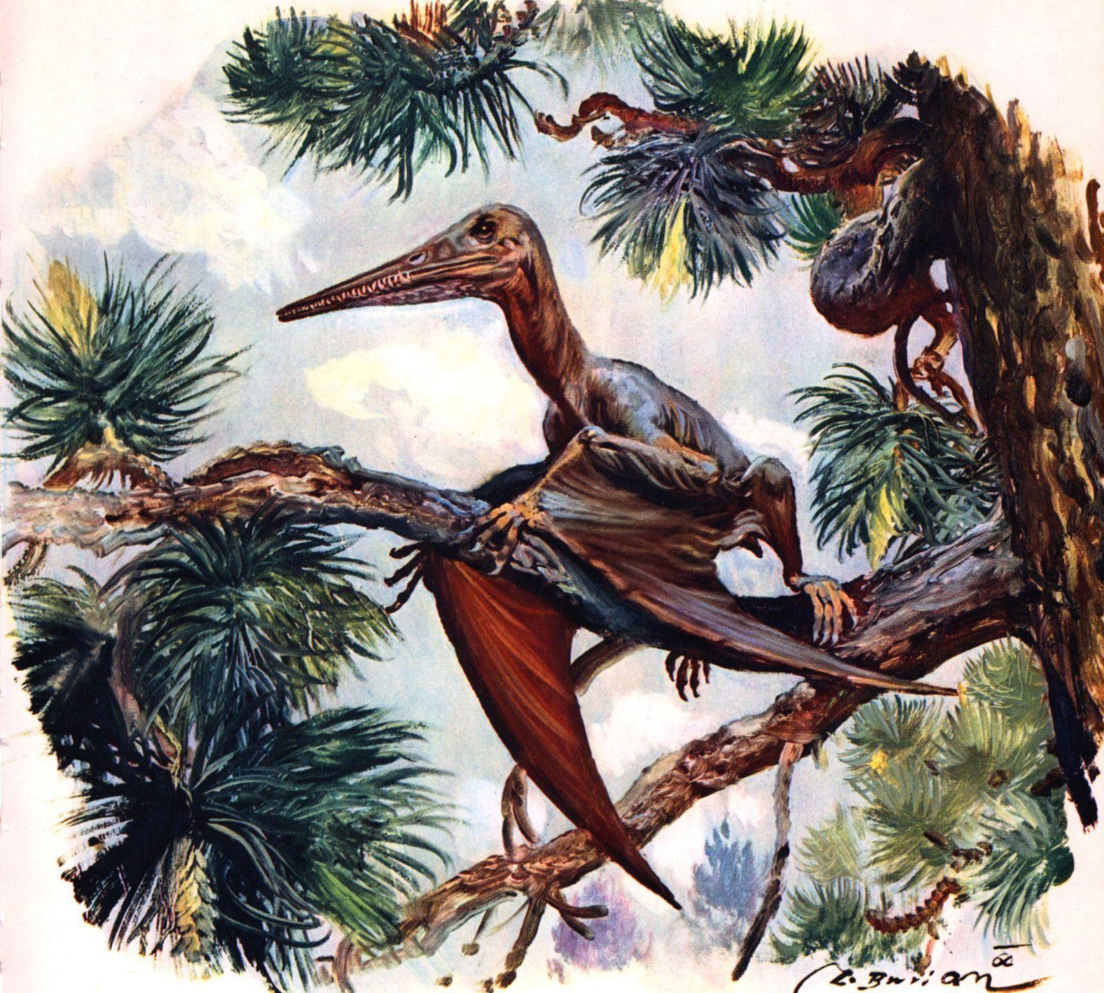динозавры, динозавр, древние животные, | Динозавры ...
