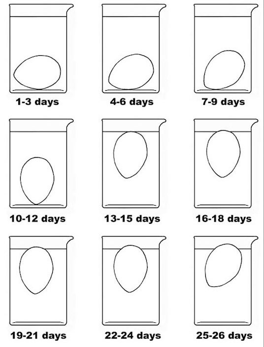 Mit diesen 12 cleveren k chentricks kannst du ordentlich - Eier kochen zeit ...