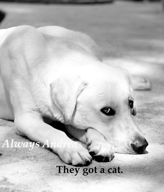 Dog They Got a Cat quote   Dog Love Series images Fine by