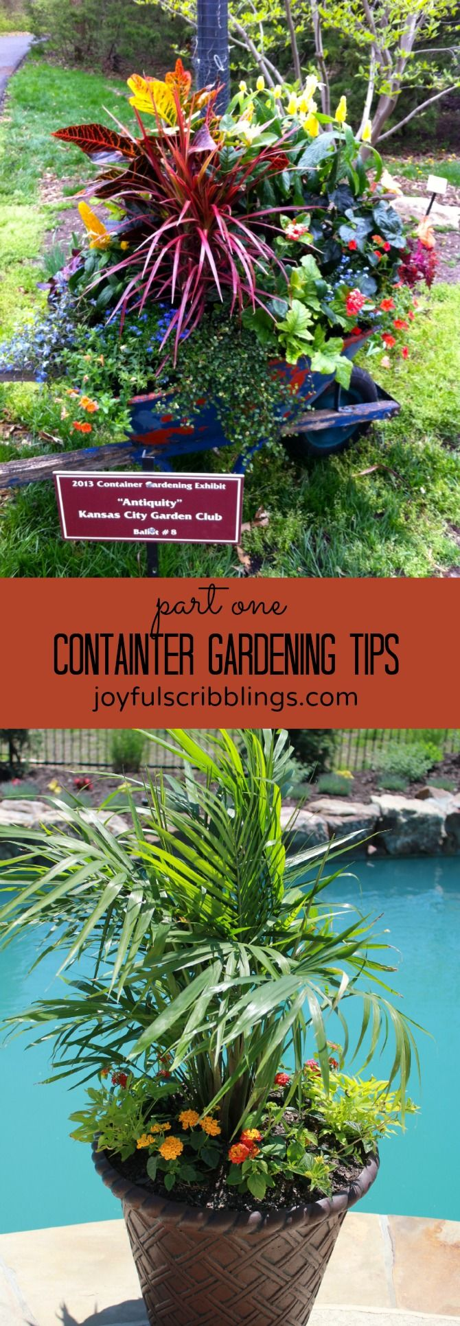 conatiner gardening tips