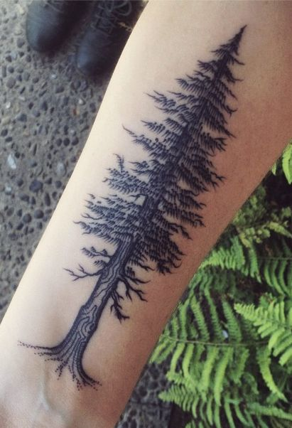 Redwood | Tattoos | Forest tattoos, Redwood tattoo, Tattoos