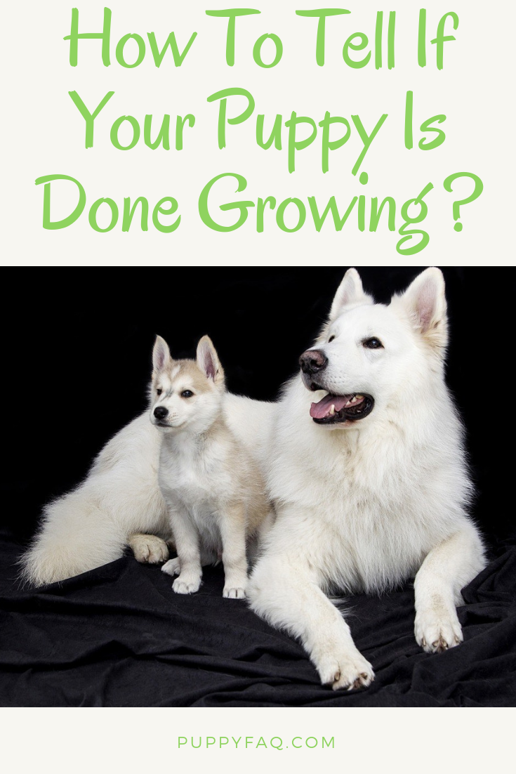 How To Tell If Your Puppy Is Done Growing Puppy Development
