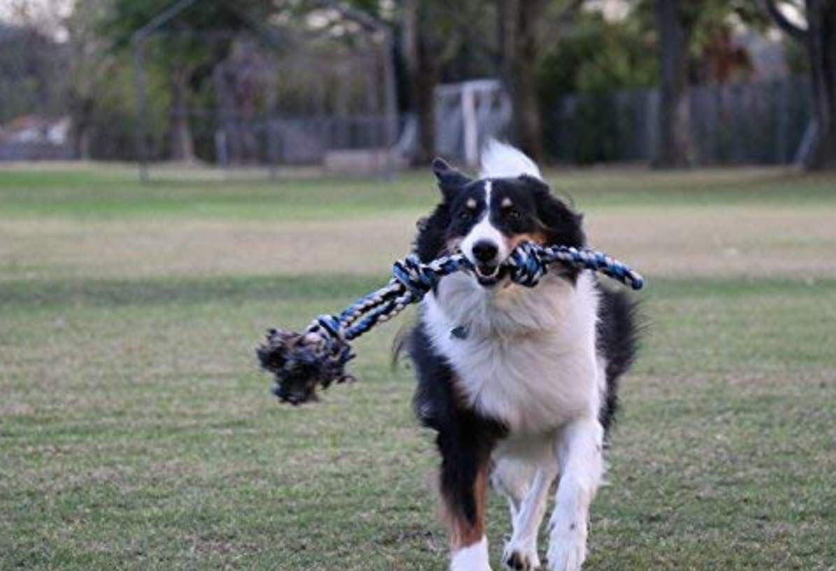 Xl Dog Rope Toy For Aggressive Chewers Benefits Non Profit Dog