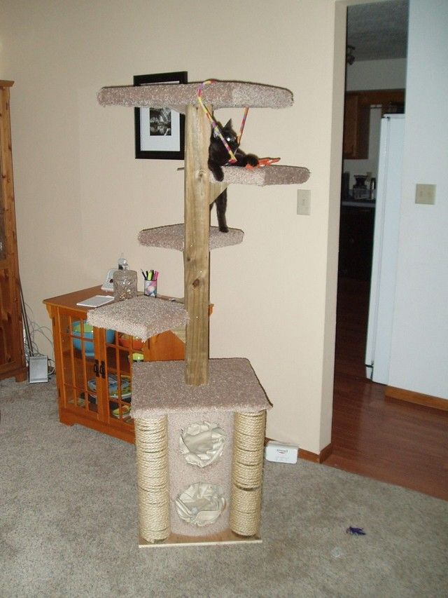 The Ultimate CAT CARE Guide   Cat condo, Cat and Animal