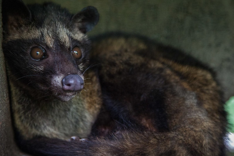 The Dark Truth Behind Kopi Luwak, the World's Most