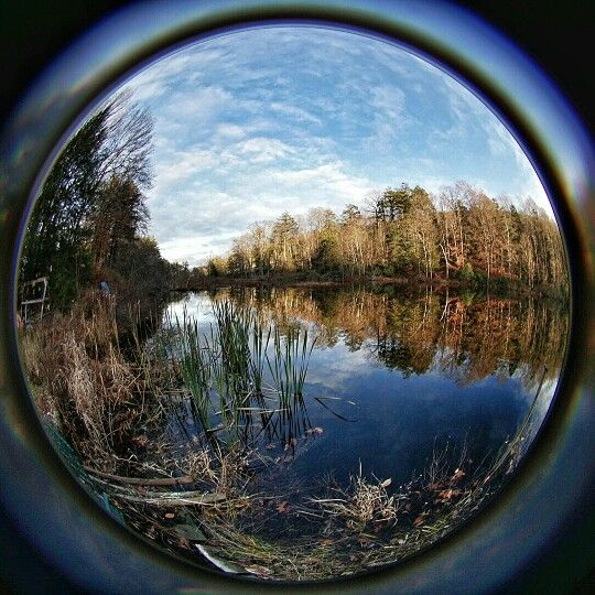 view from my backyard using a sony a6000 with lensbaby circular fisheye lens - Hinterhoflandschaften